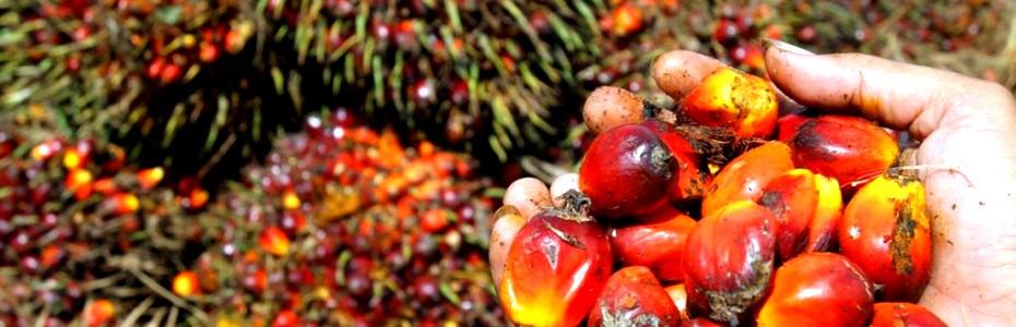 Olio di palma nei nostri alimenti? Un veleno per l'organismo