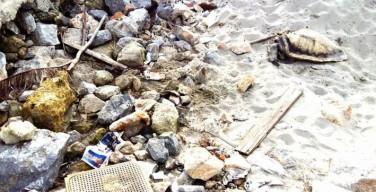 Dopo un mese la tartaruga trovata a Capaci è ancora fra la spazzatura