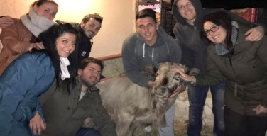 L'Enpa Carini si prende cura del vitellino investito da un tir sulla strada Carini-Montelepre