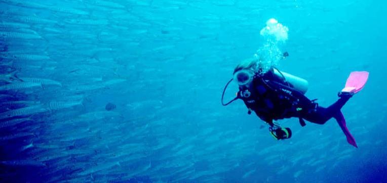 Isola Scuba Fest: tuffati in un mare di meraviglie ad Isola delle Femmine