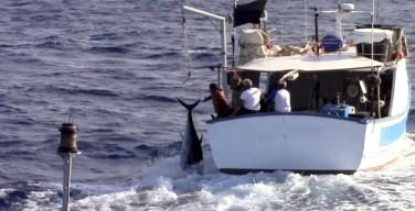 Inseguimento al largo di Isola delle Femmine: fermati dei pescatori di frodo di tonno rosso