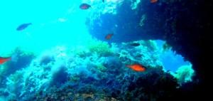 area marina protetta capo gallo isola