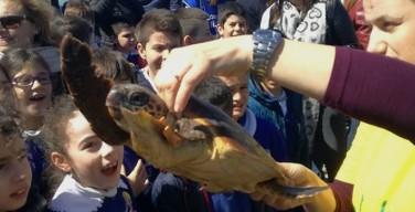 Liberate nel mare di Isola delle Femmine tartarughe col nome di due vittime di mafia (VIDEO)