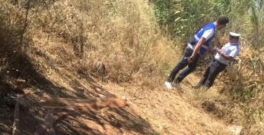Operazione anti-bracconaggio ad Isola delle Femmine: disinnescata una trappola nel parco Dune (VIDEO)