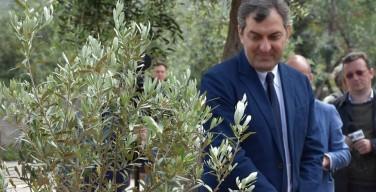 """Un ulivo in memoria di Luigi Calabresi nel giardino della memoria """"Quarto Savona 15"""""""